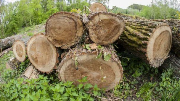 Výrub drevín - správne konanie